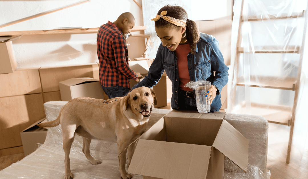 What About Pets? A Guide to Helping Your Pets Adjust After the Packers and Movers Leave